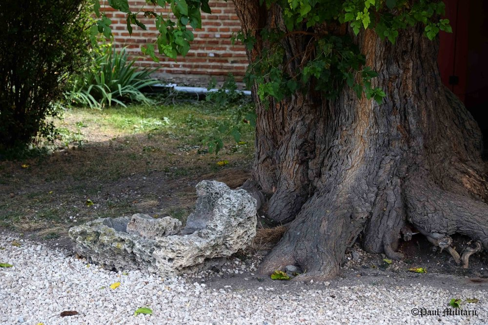 artefact-at-the-root-of-a-tree-old