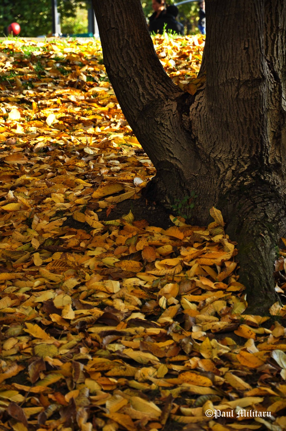 carpet-of-dried-leaves