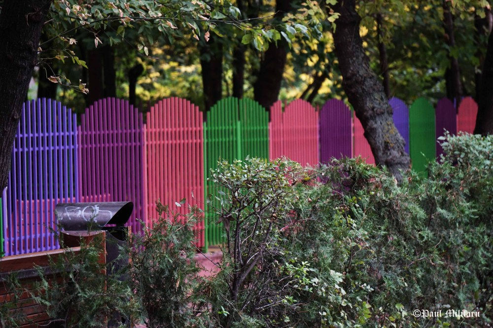 colored-fence