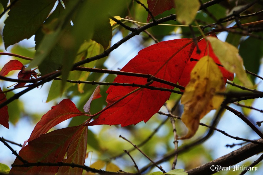 colorful-leaves-in-october