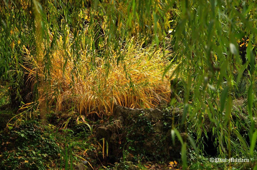 dry-grass-under-the-branches-of-a-weeping-willow