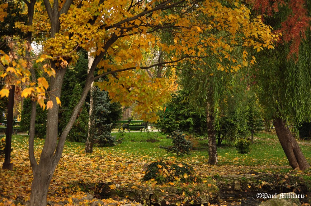 fall-in-park