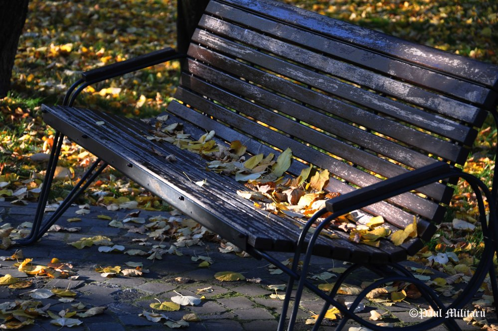 lost-on-the-bench