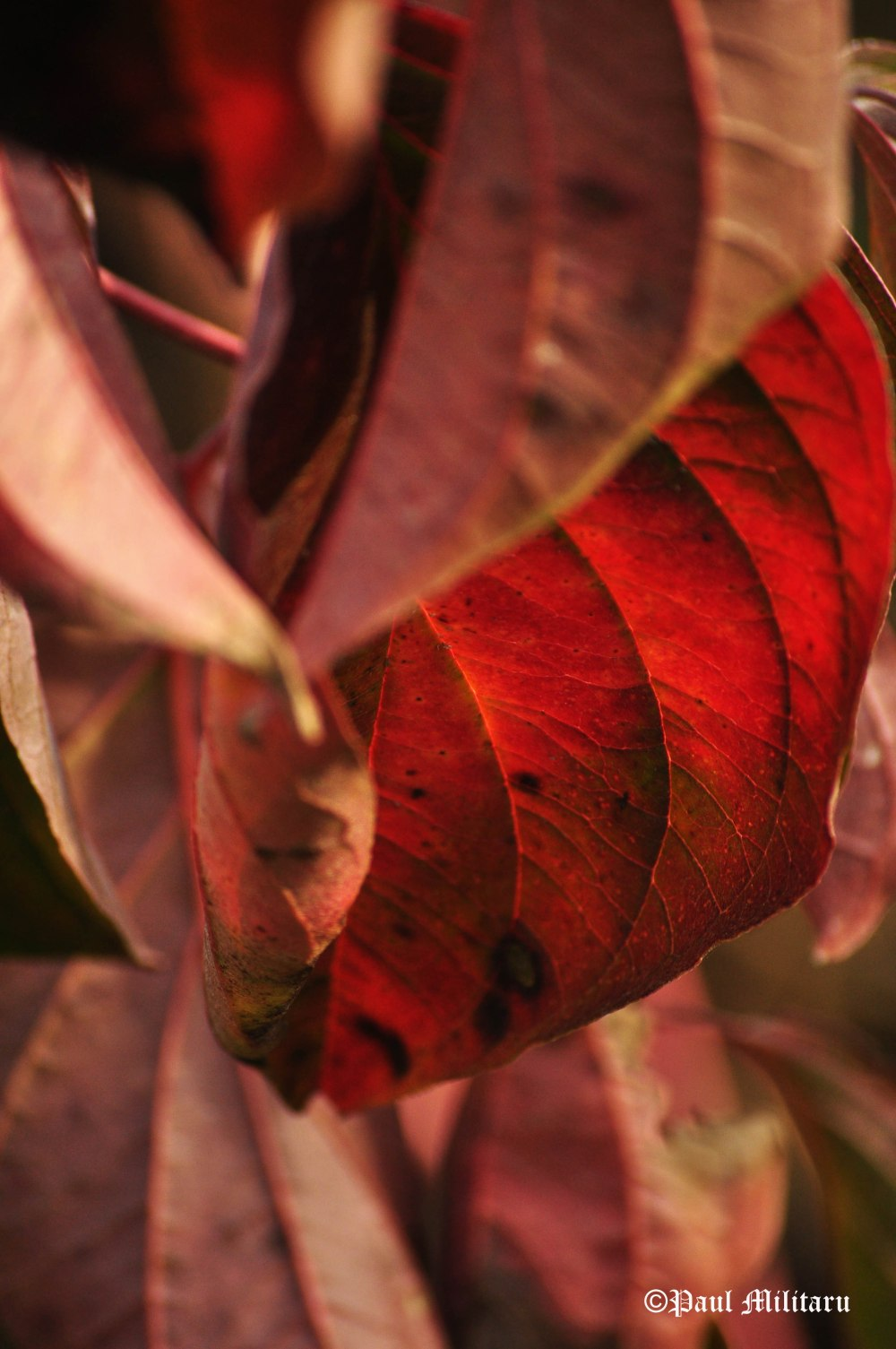 red-late-autumn