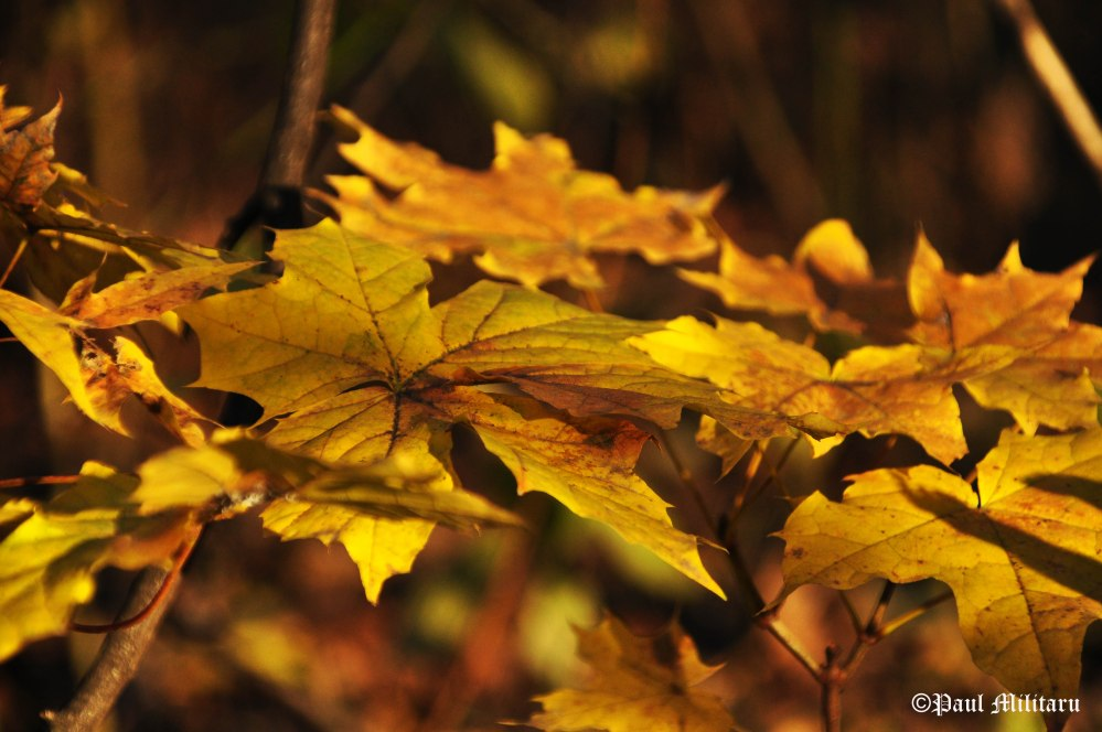 favorite-color-of-autumn-yellow
