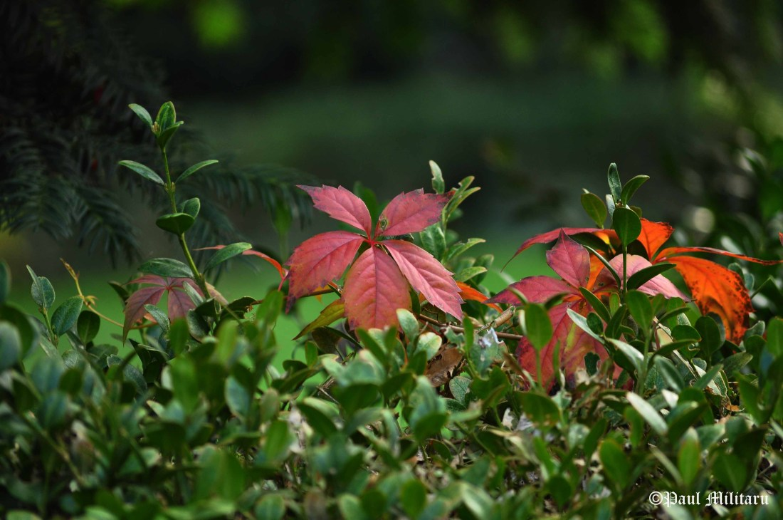 red-rust-and-green