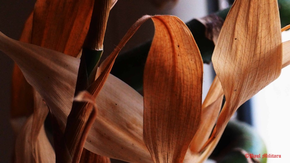 dried-bamboo-leaves