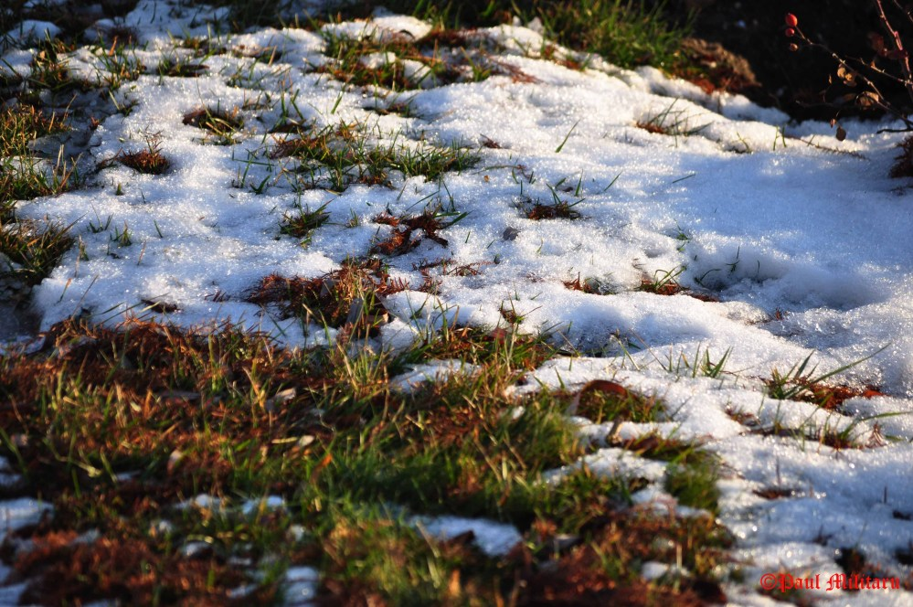 grass-and-snow