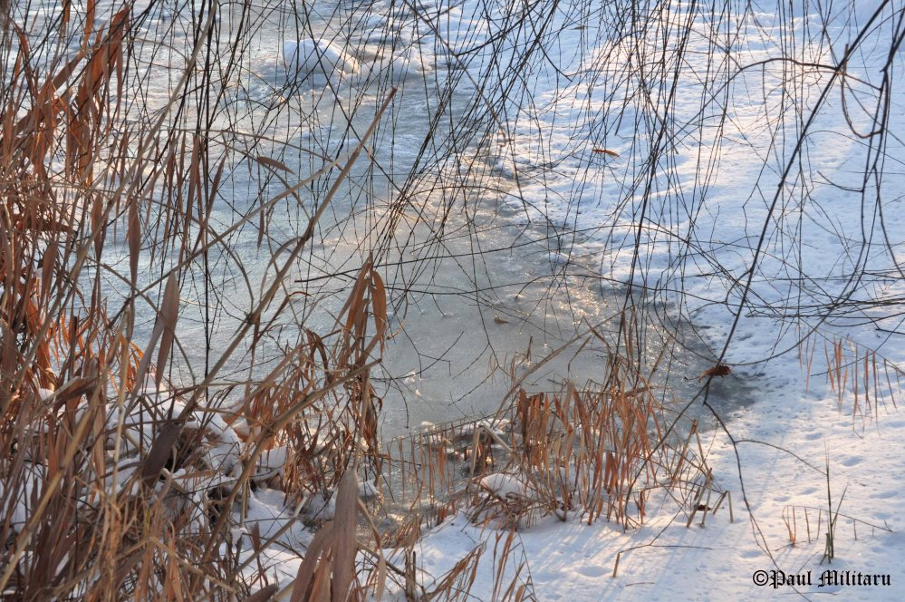 reed-ice-and-snow