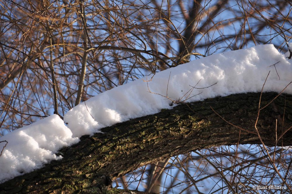 snow-on-the-trunk