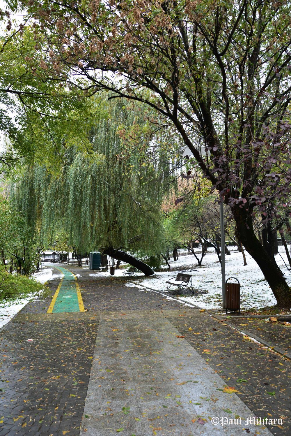 weeping-willow-under-the-burden-of-snowflakes
