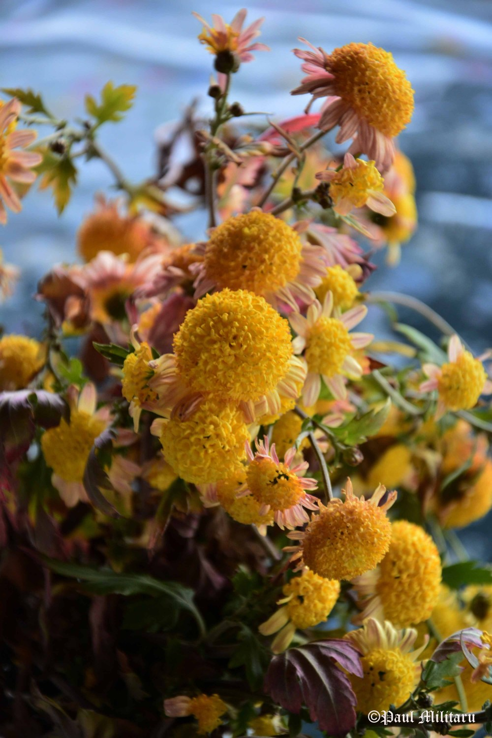 yellow-ornamental-flowers