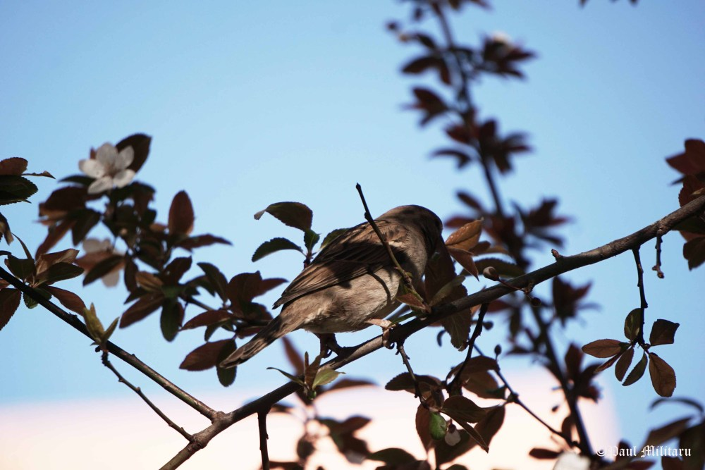 sparrow at work