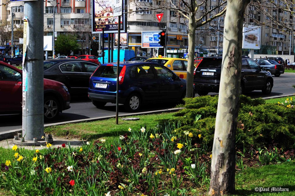 flowers and...cars