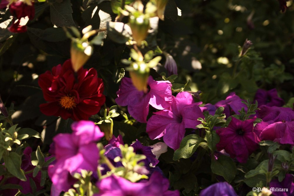 petunias among branches