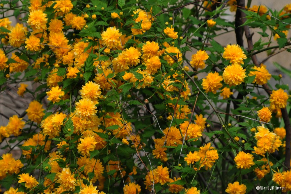 wild yellow flowers