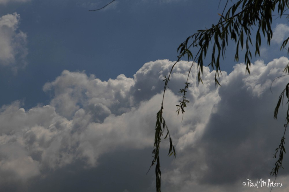 clouds and willow branches