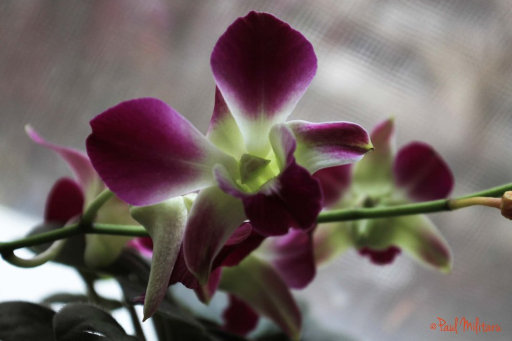 orchids in indirect light