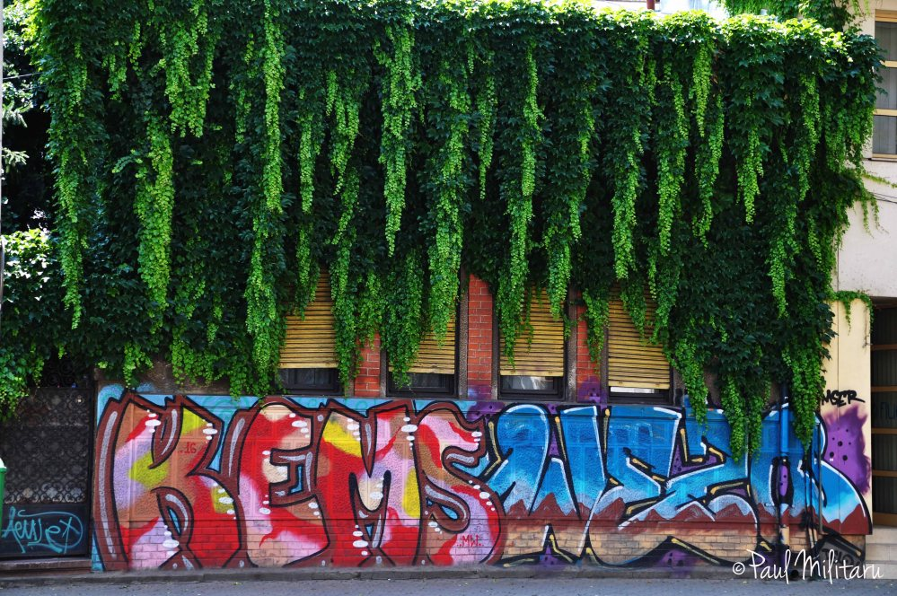 art - ivy and graffiti