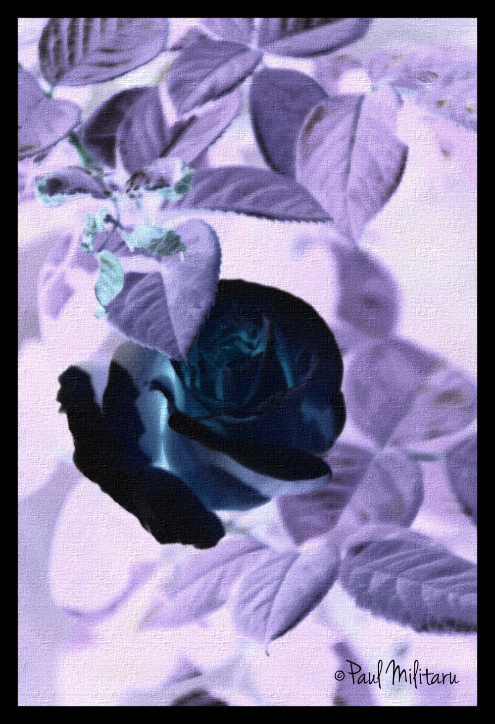 art - negative...rose