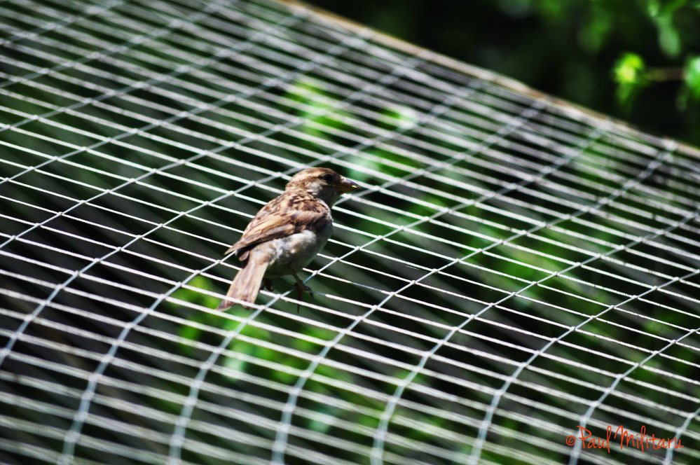 sparrow...on the net