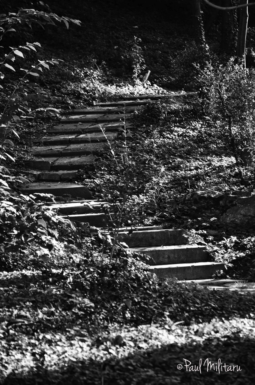 stairs to...nowhere