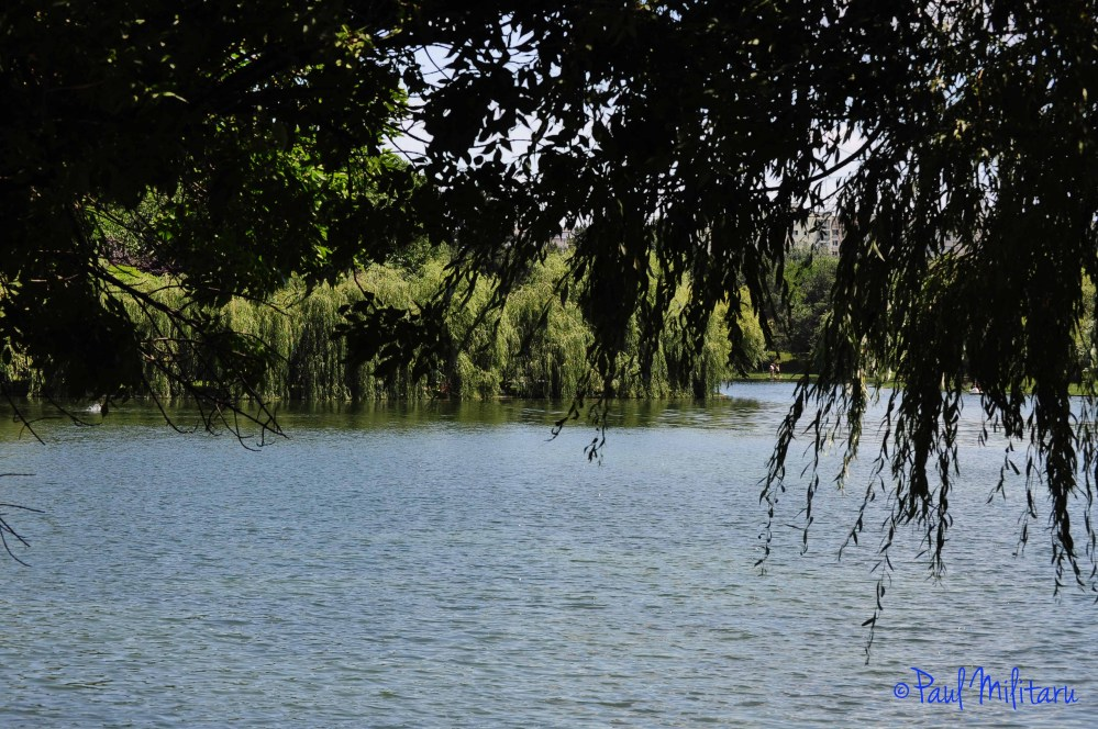 under willows near the lake