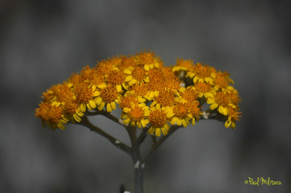 wild yellow flower 2