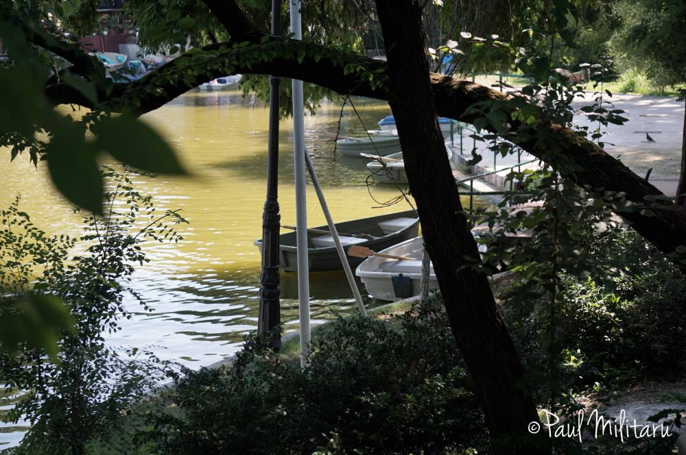boats in the shade