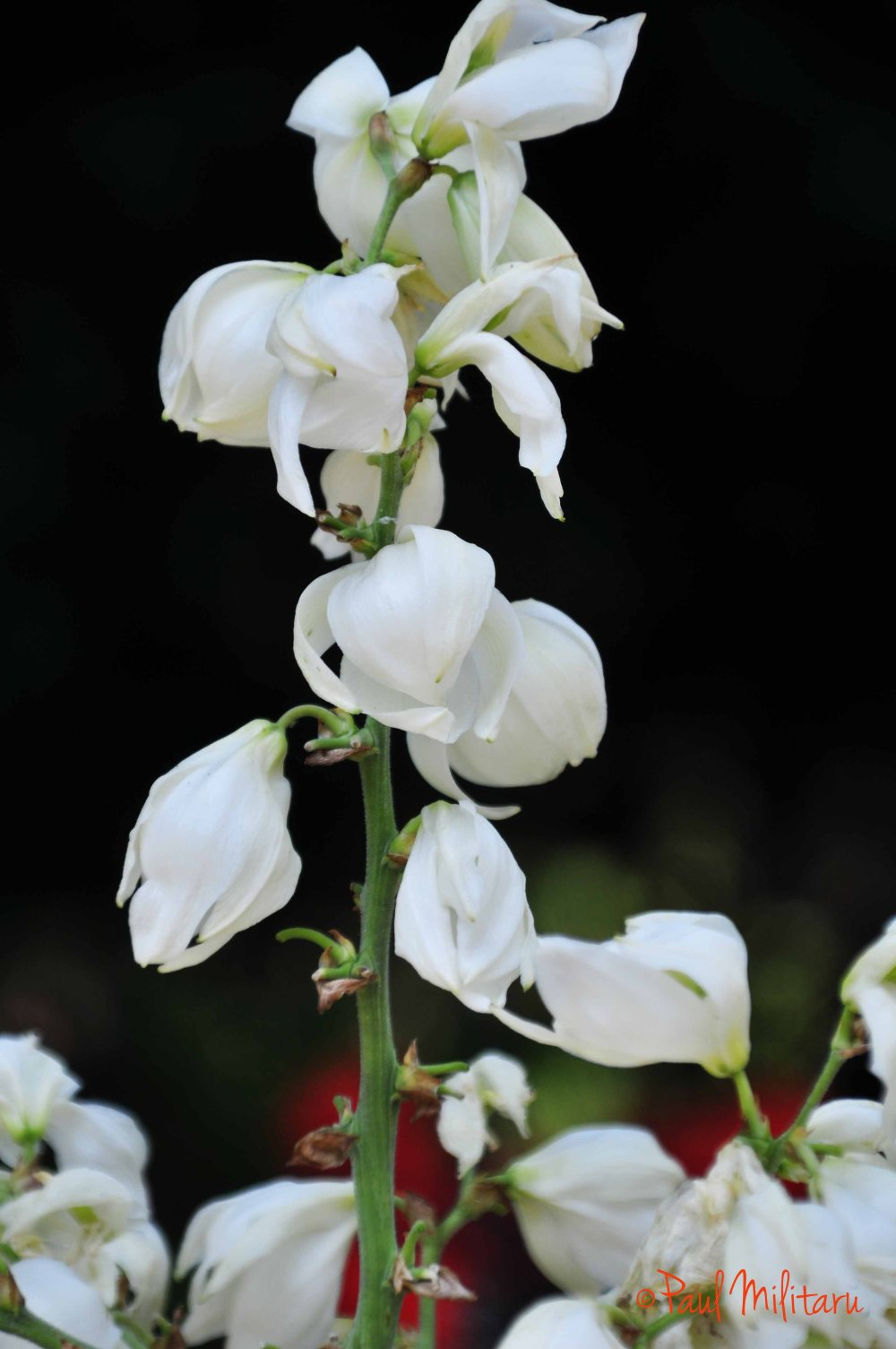 ornamental white flower