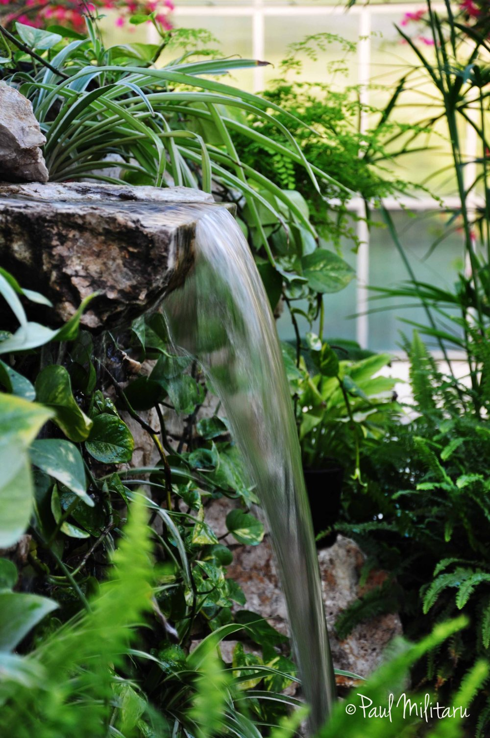 waterfall in the greenhouse