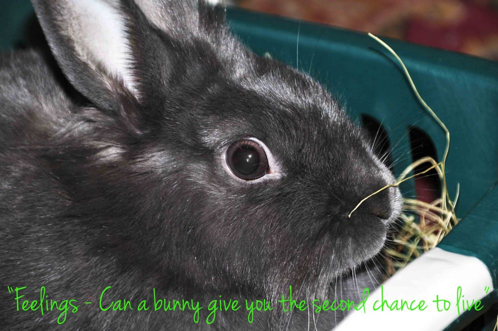Feelings - Can a bunny give you the second chance to live