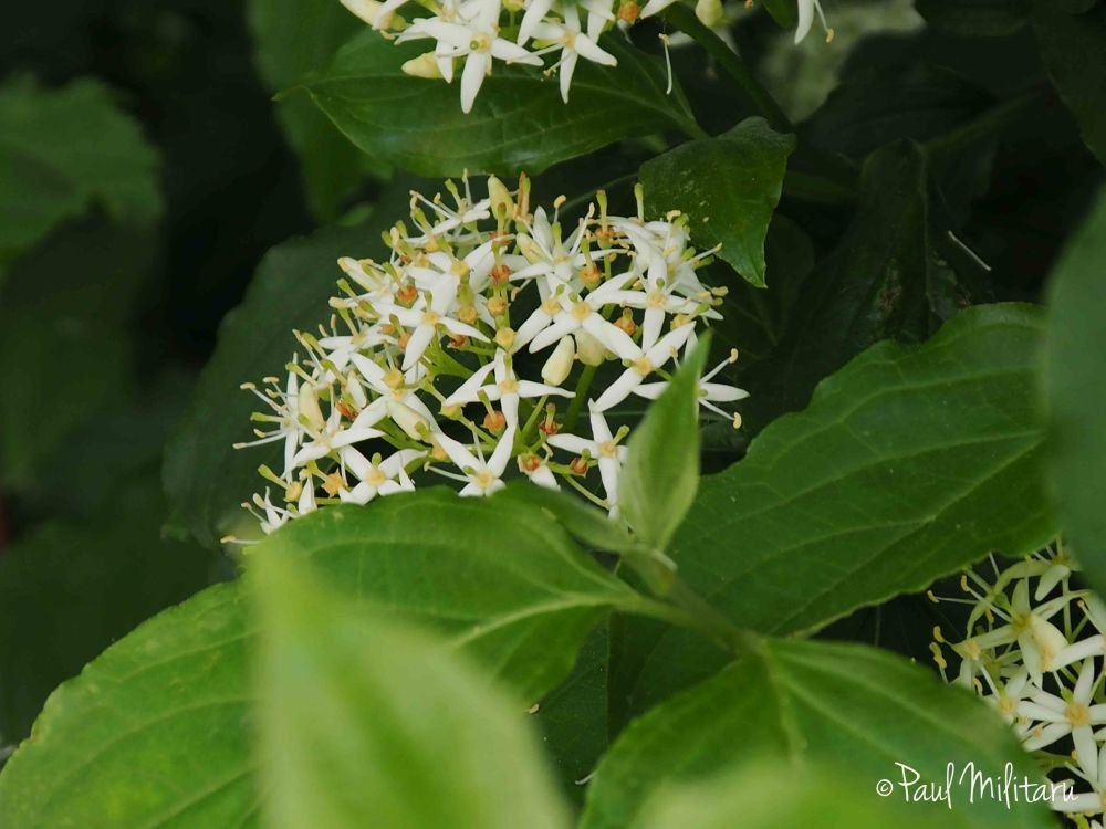 white ornamental flowers
