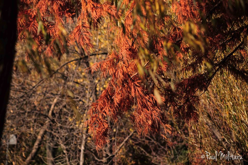 fall between rust and brown