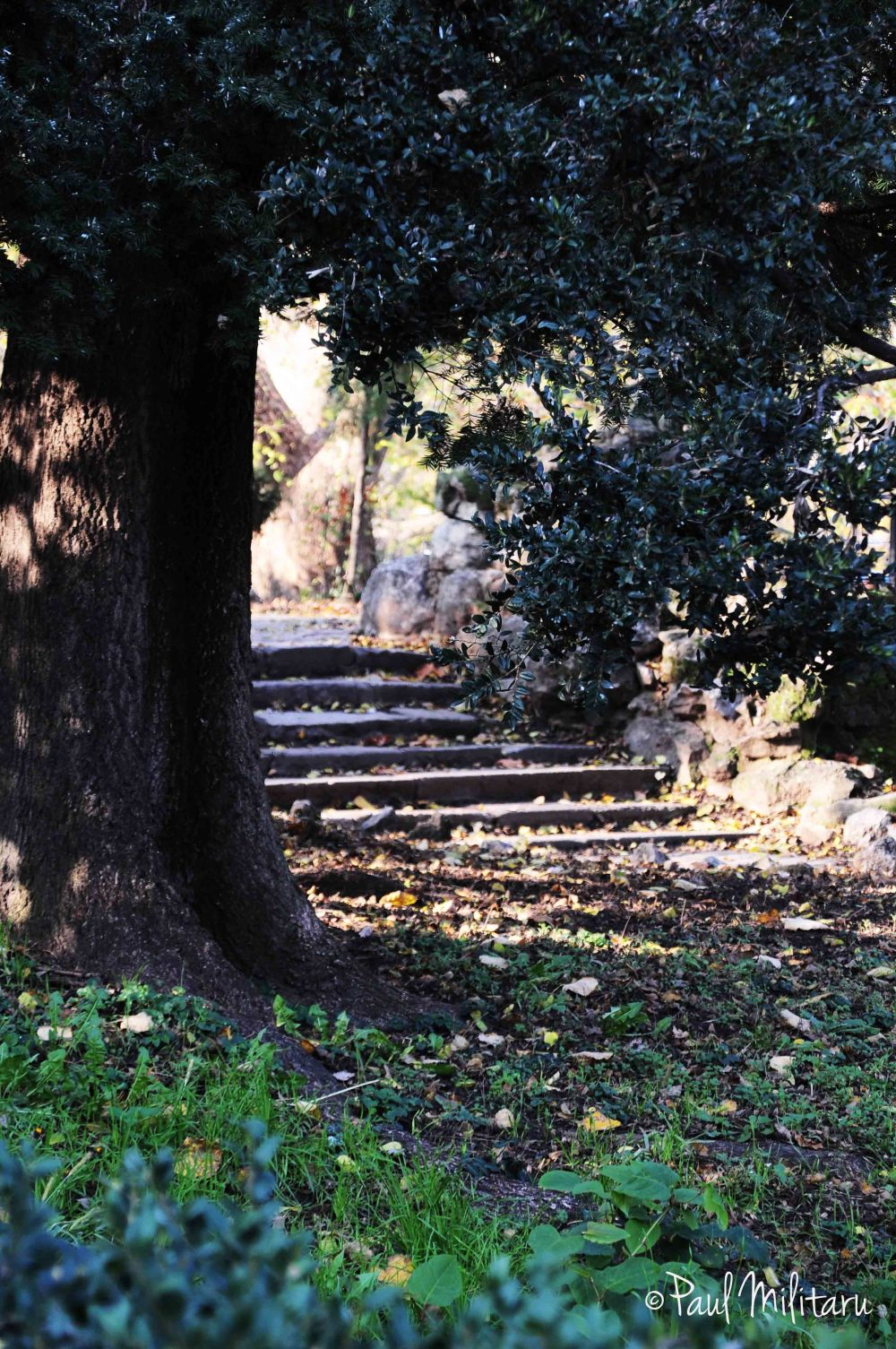old stairs under an old tree