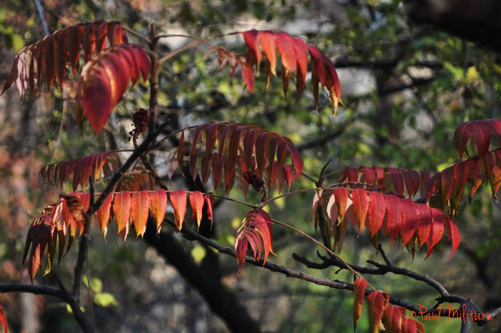 portable of red leaves