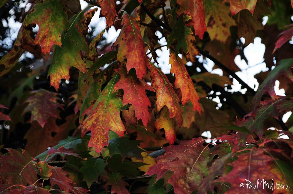 the wonderful colors of autumn