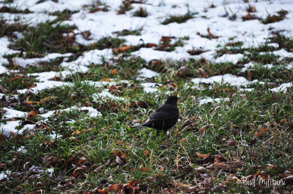 bird, grass and...snow