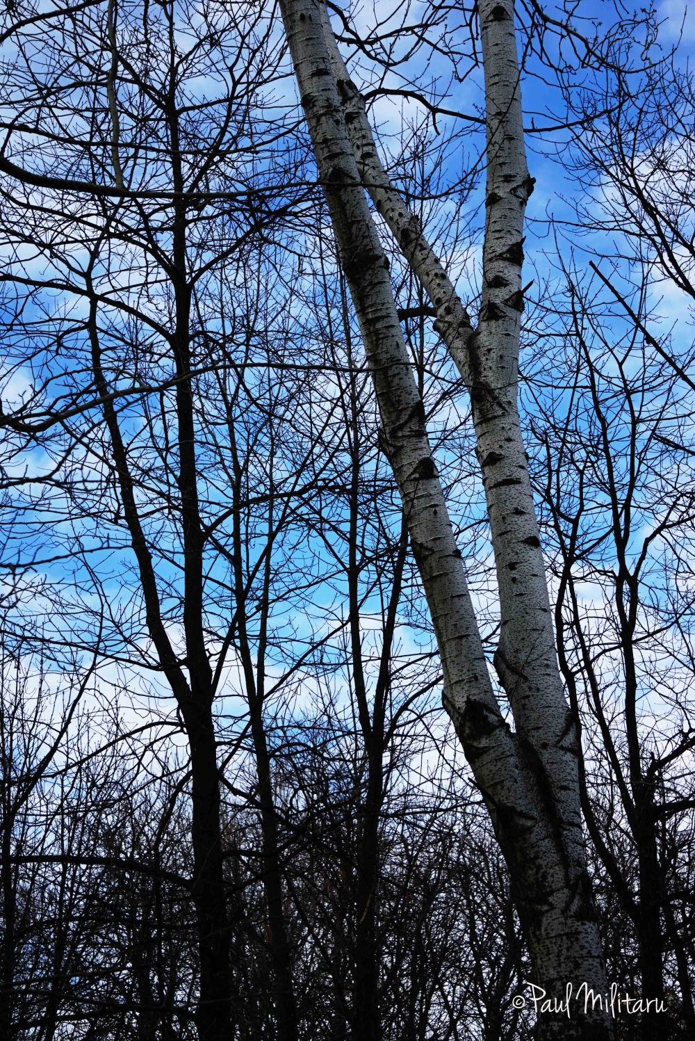 sky before the snow