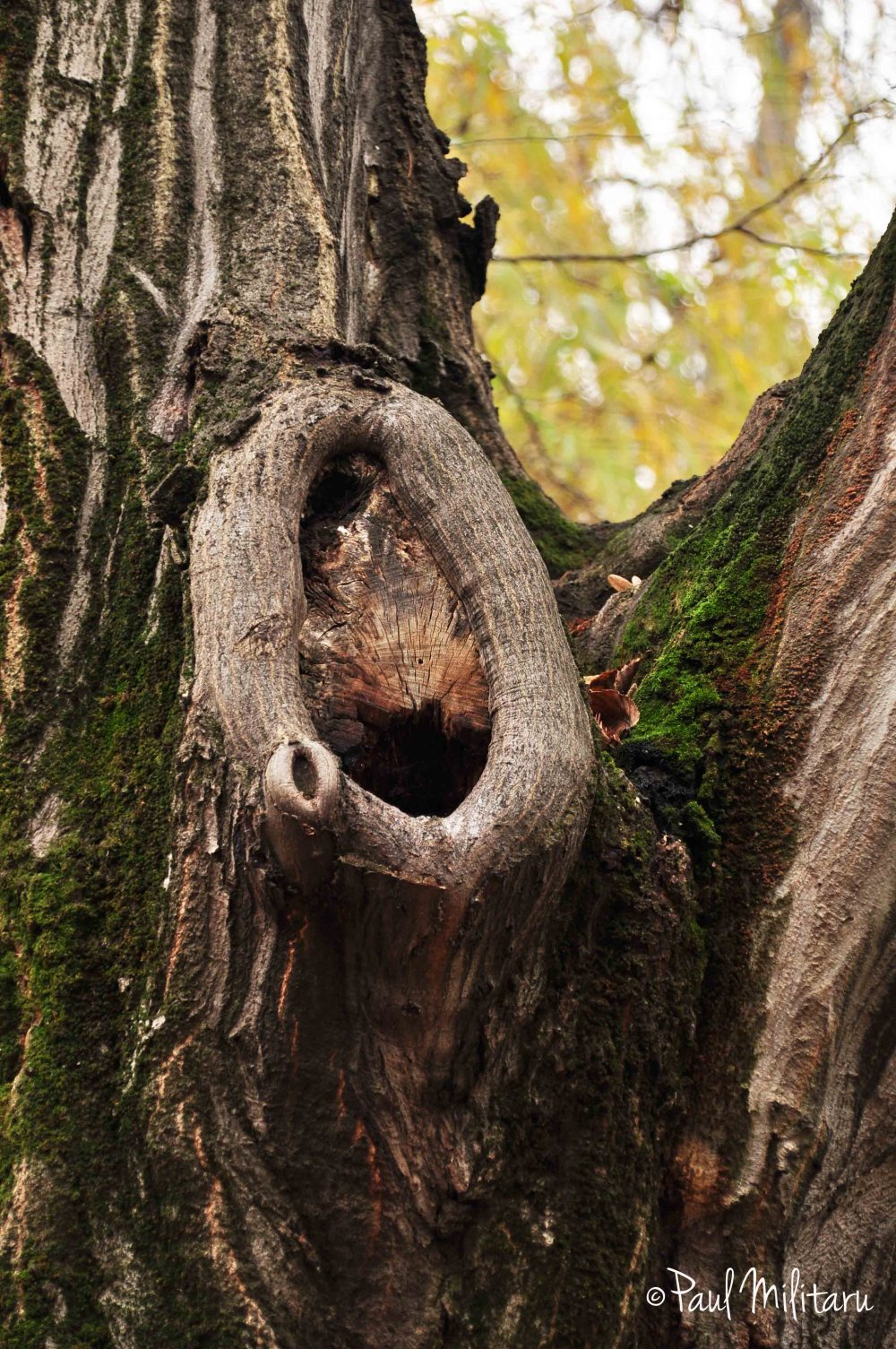 tree listens to you