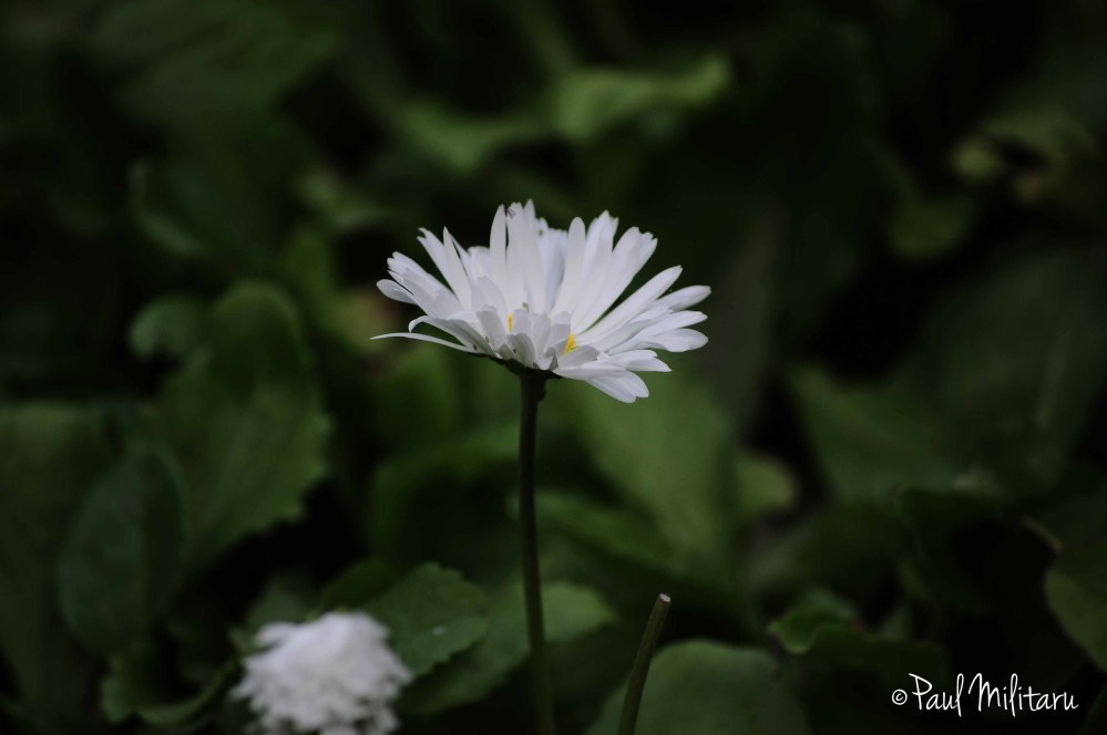 white ornamental flower