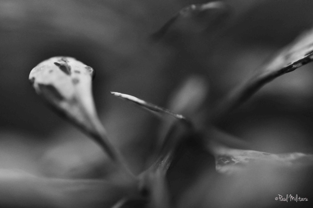 art in black and white - exotic plant leaves 3