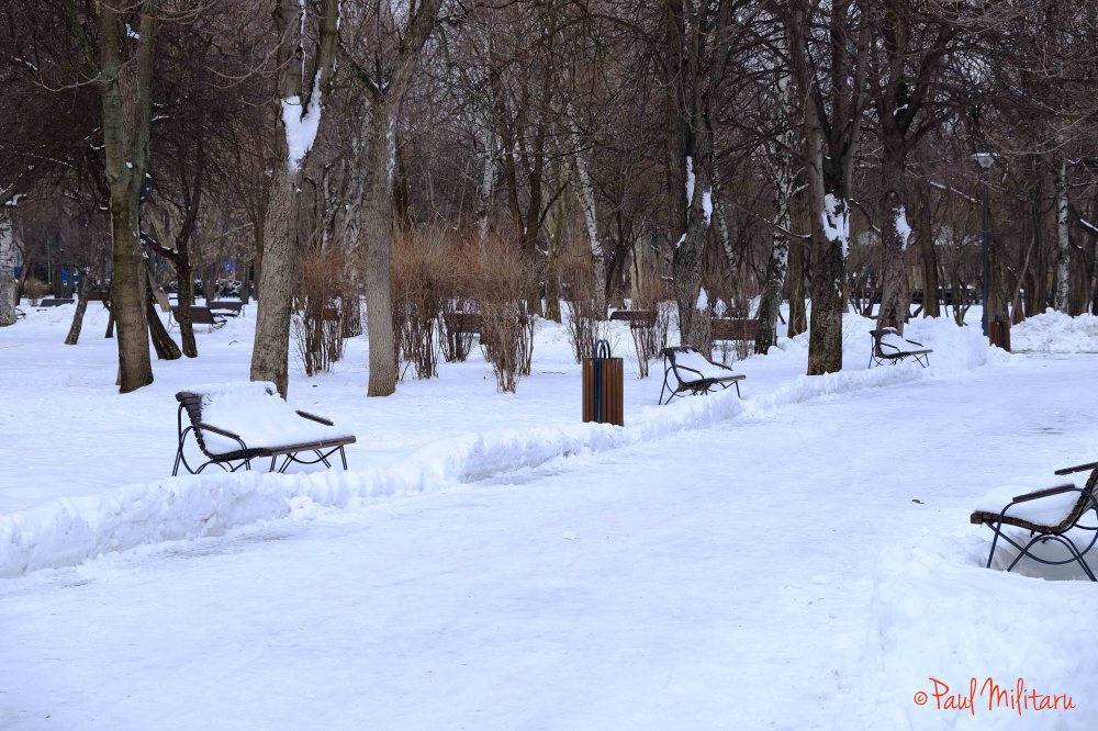 benches in the snow
