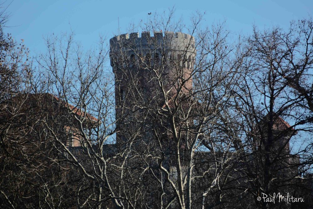 castle beyond the branches