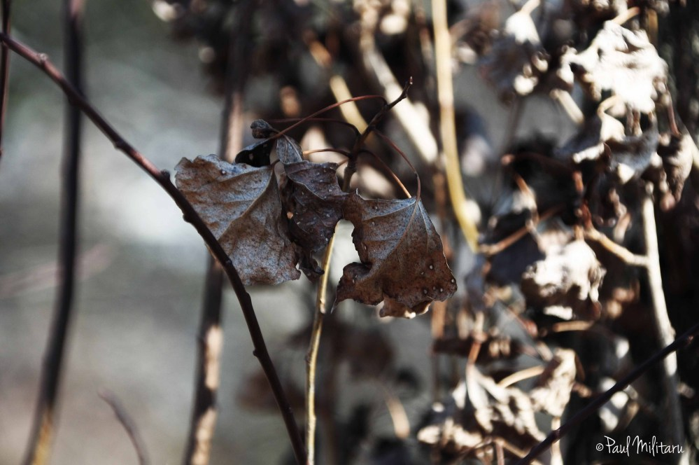 dry leaves while waiting for frost