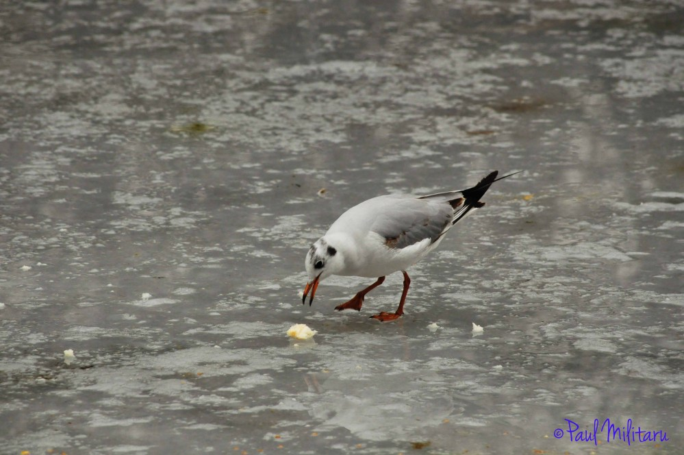 eating on ice