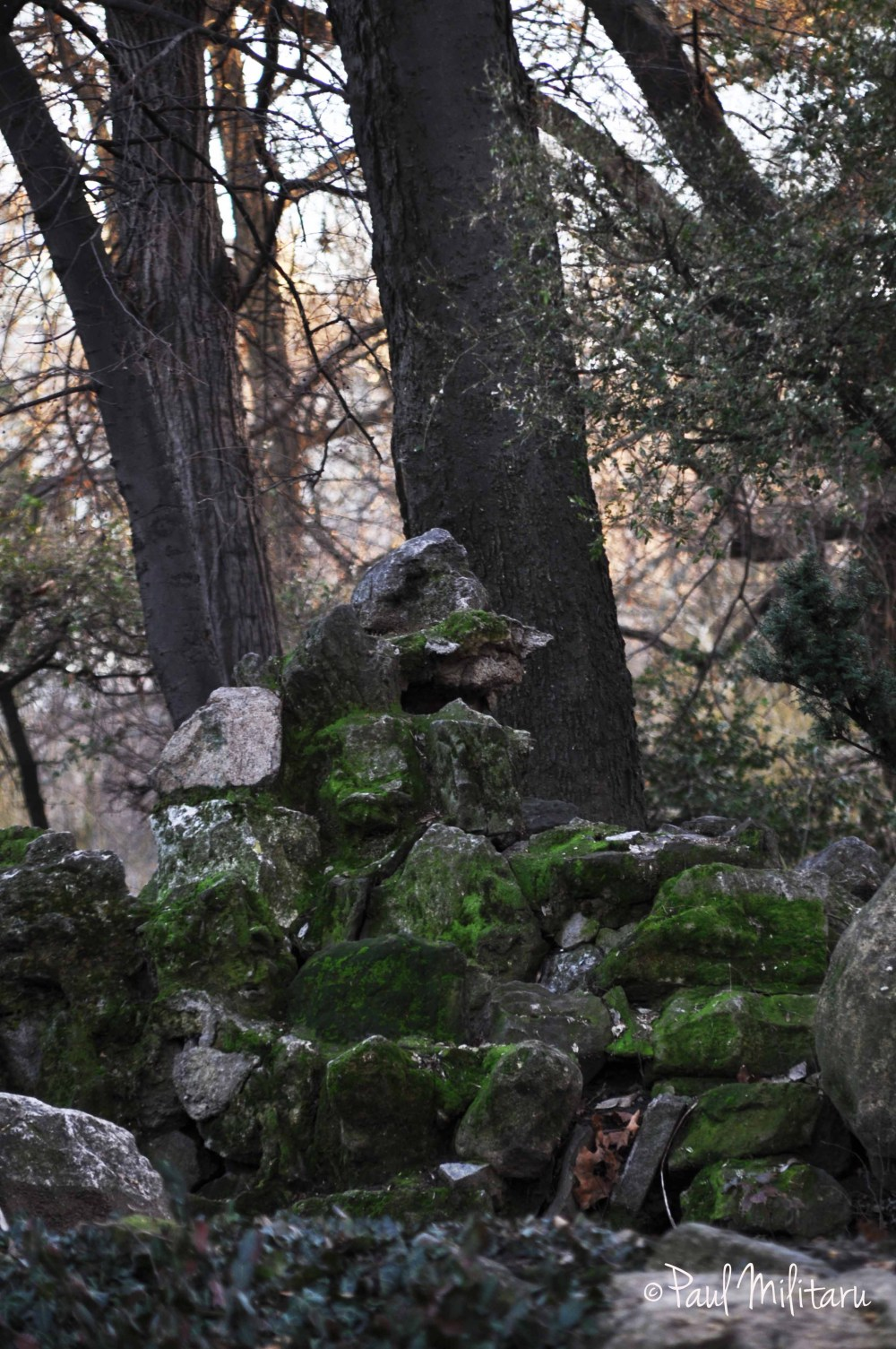 stones and moss like a dragon