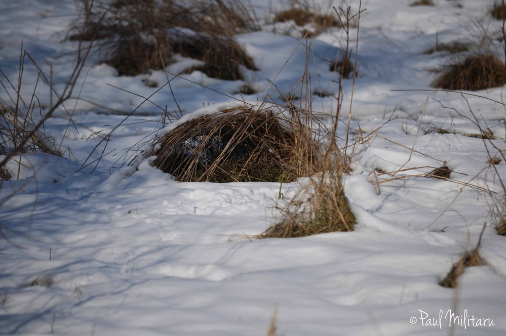 dry grass and snow
