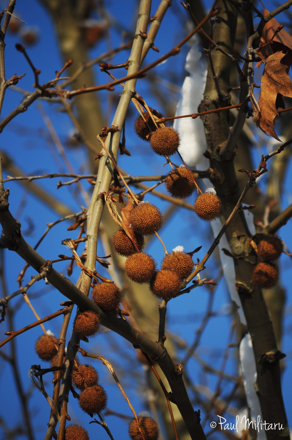 fruits in winter