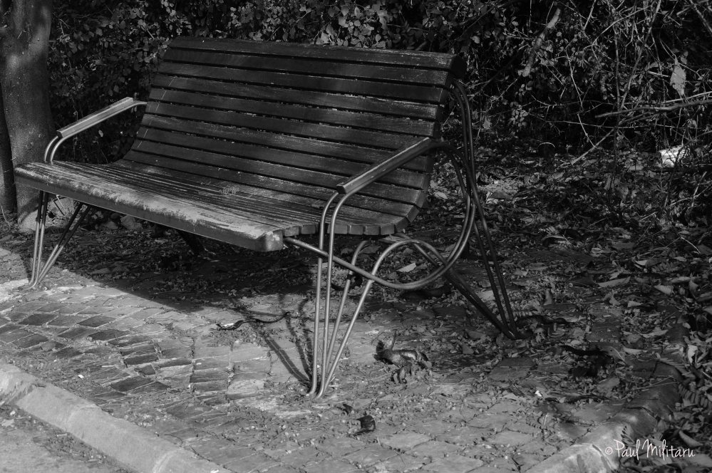 the deserted bench